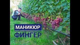МАНИКЮР ФИНГЕР на 20 е октября 2019