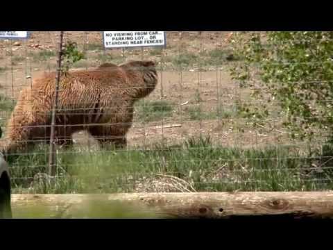 Explore Colorado The Wild Animal Sanctuary