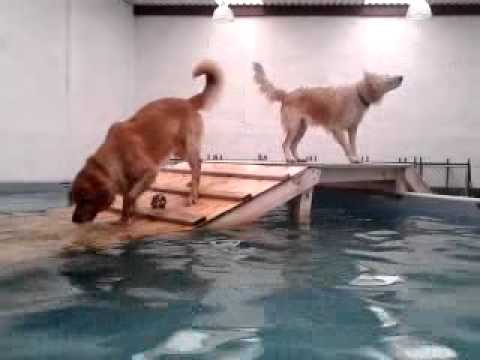 Dogvillemx pool2dog Videos De Viajes