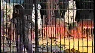 Alan Gold - Tiger Show