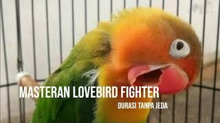 Gambar cover MASTERAN LOVEBIRD FIGHTER NGEKEK PANJANG VERSI 2