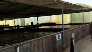 A Fish Farm House In Bukeriya-4