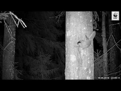 Liito-oravan nopea vierailu