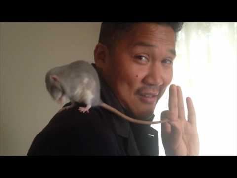 How to change someone's mind about rats in under 60 seconds.
