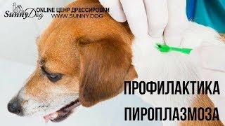 Профилактика пироплазмоза. Защита от клещей.