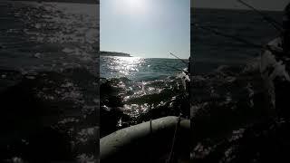 Рыбалка 2019 Шардара