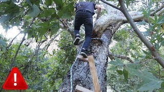 DANGEROUS TREE FORT IN THE WOODS thumbnail