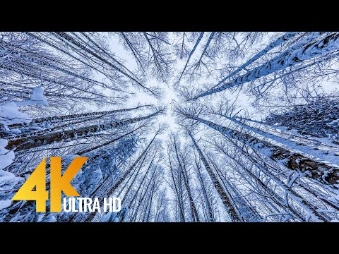 Walking in a Snow Forest №3 Winter Forest Scenery 4K Squak Mountain Fireplace Trail, WA 2 HRS