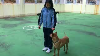 Publication Date: 2017-12-16 | Video Title: 小小領犬員@慈雲山聖文德天主教小學