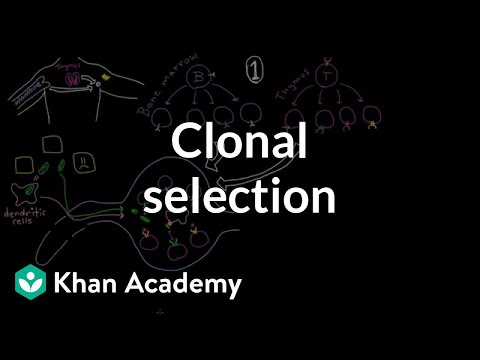 Clonal selection | Immune system physiology | NCLEX-RN | Khan Academy