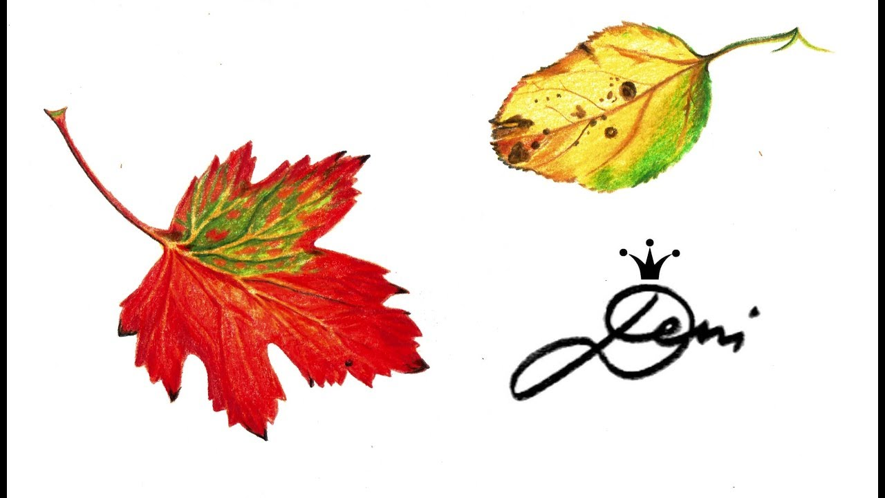 Herbstblatter Zeichnen Teil 2 Wie Zeichnet Man Herbst Blatter