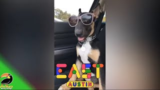 🐶 Funniest Dogs Vol. 39 | Animals Doing Things