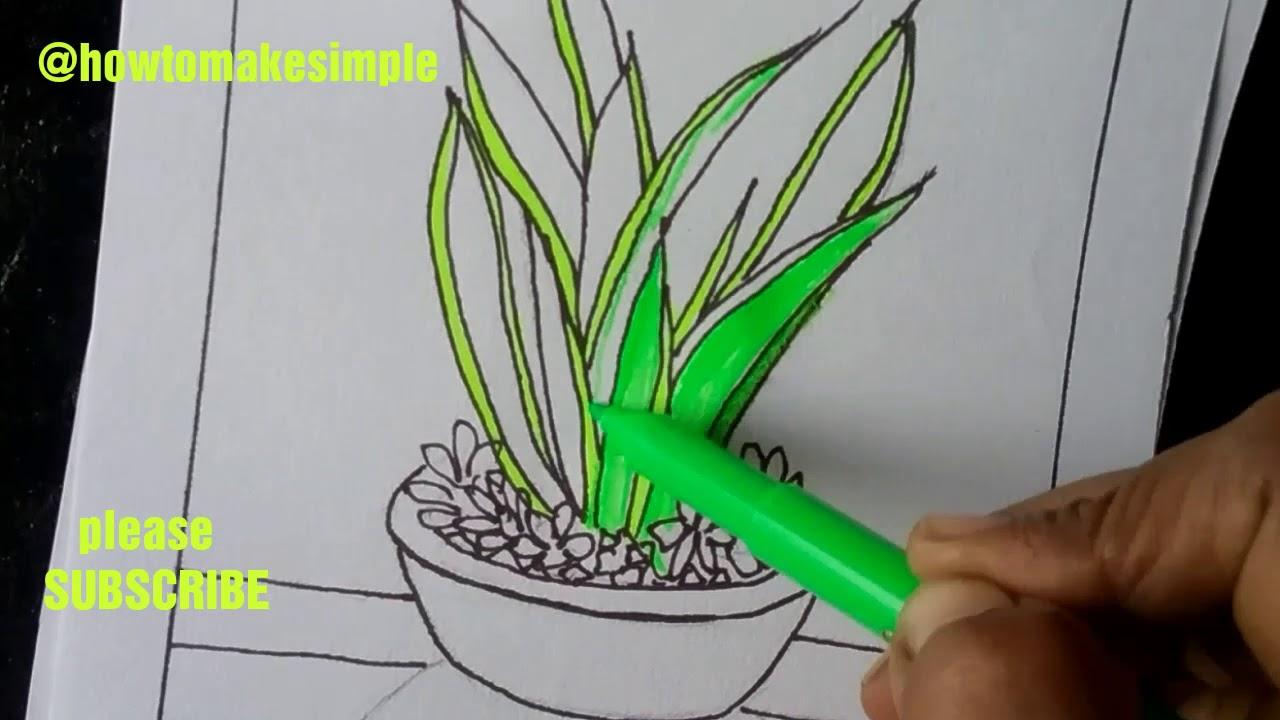 how to make simple Snake Plant - Dracaena trifasciata/Sansevieria trifasciata / indoor plant drawing