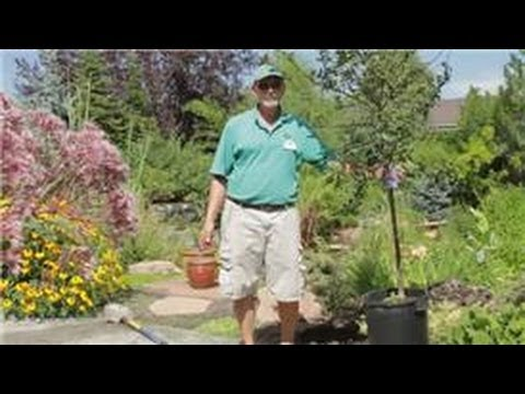 Garden Tips : How to Plant Flowering Crabapple Trees