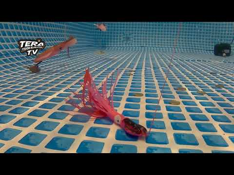 X Paragon Saltwater Rubber Jigging Lure Tera Squid Jig 80G