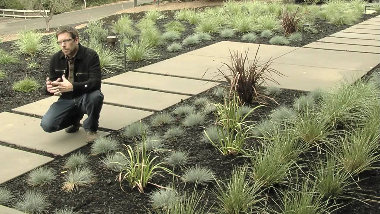 plants modern landscaping