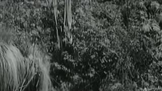 'Alpiyskaya ballada' 'Альпийская баллада' (1965)