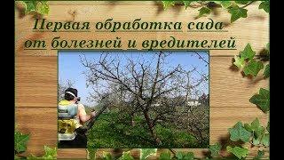 Первая весенняя обработка деревьев, кустарников и винограда. Бордосская смесь.