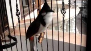Repeat youtube video นกผมเก่งแต่ที่บ้านคลิป3