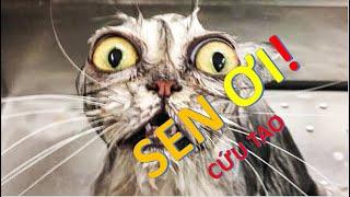 Tik Tok Hài Động Vật |  Xem đi xem lại vẫn cười | Té ghế với mèo chơi bóng | Secret Life of Pets