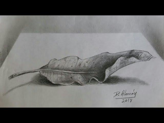 Hoja seca a lapiz/Dry mango leaf/ how to draw a dry leaf. Darwin Alarcon.