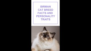 Birman Cat Breed Facts and Personality Traits #Shorts