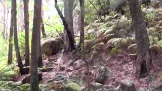 Galston Gorge to Crosslands Reserve (Along the Great North Walk)