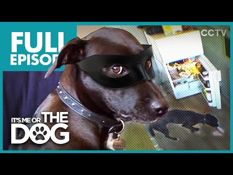 The Dog Burglar: Lucy | Full Episode | It's Me or the Dog