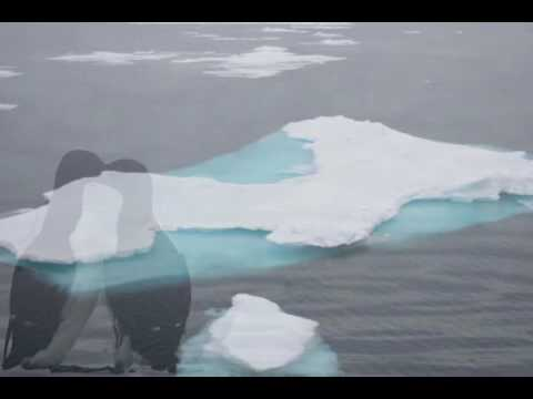 the arctic.flv