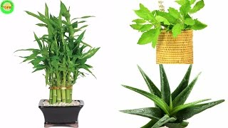 10 Plants that Attract Positive Energy