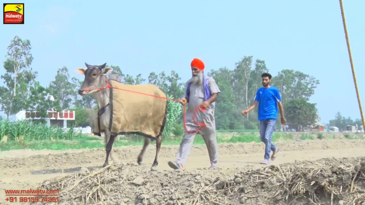 MANKAN (Kapurthala) | BULLOCK CART RACES | ਬਲਦਾਂ ਦੀਆਂ ਦੌੜਾਂ | JUNE - 2016 | OFFICIAL FULL HD VIDEO