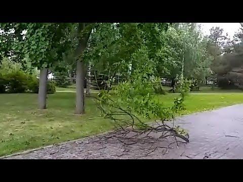 Песчаная буря и поваленные деревья: на Казань обрушился ураган