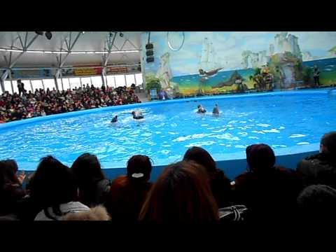 Дельфинарий «Немо» в Ереване