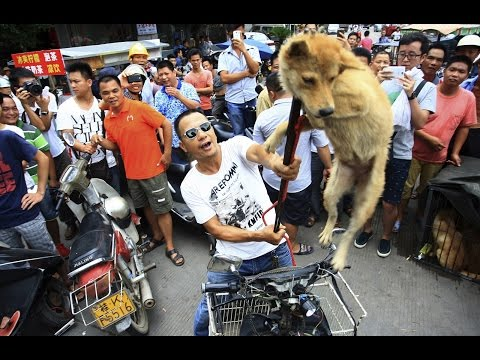 YULIN DOG MEAT FESTIVAL - COMPARING CULTURES | Info