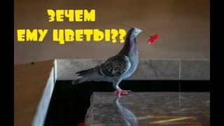 Птица воровала маки с могилы солдата  История поразила весь мир