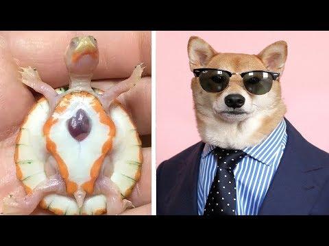 10 حيوانات الاكثر شهرة على الانترنت , ستشعر بالغيرة منهم  - 22:51-2019 / 7 / 20