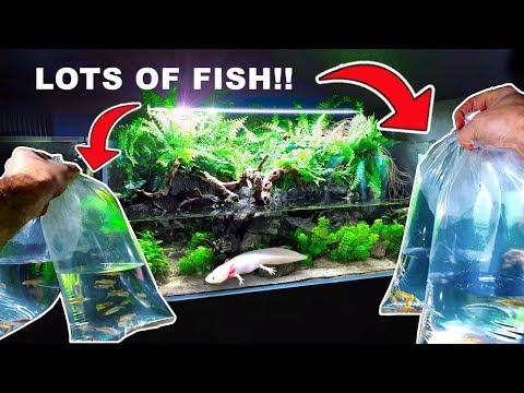 💚 HUGE 4ft AXOLOTL AQUA TERRARIUM: Adding LOTS Of Fish // PLANTED AQUARIUM & PALUDARIUM