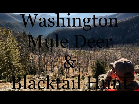 Mule Deer & Blacktail Deer Hunt - Washington State