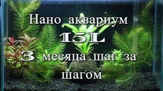 нано аквариум 15L 3 месяца шаг за шагом