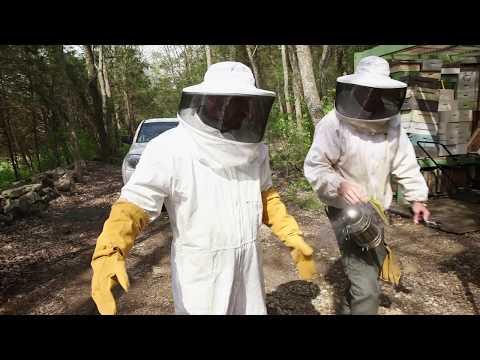 "EPISODE 313 - ""THE BEE'S KNEES... AND HABITAT"""