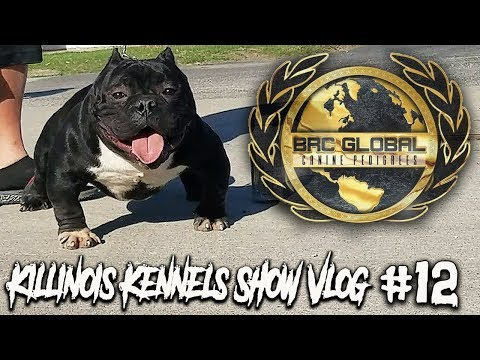 AMERICAN BULLY/EXOTIC BULLY DOG SHOW!!!!!  KILLINOIS KENNELS SHOW VLOG#12 BRC GLOBAL