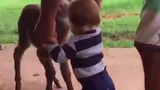 Животные друзья человека/очень милое видео/дружба людей и животных.