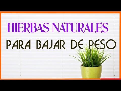 10 increibles hierbas naturales para bajar de peso y
