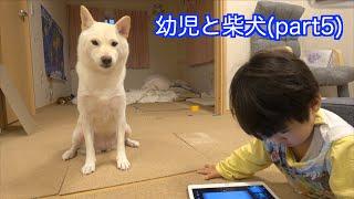 幼児と柴犬part5