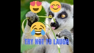 funny animals [2-3 ] : try not to laugh . New video