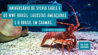 Lagostas em perigo; Aniversário de Sylvia Earle e WWF Brasil; e mais notícias socioambientais...
