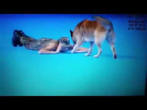 WDS 2016 Танцы с собаками, Люси и Дерил