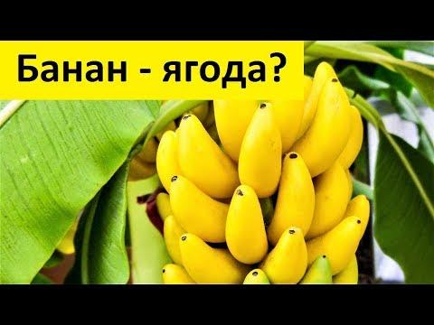 Банан - ягода ?