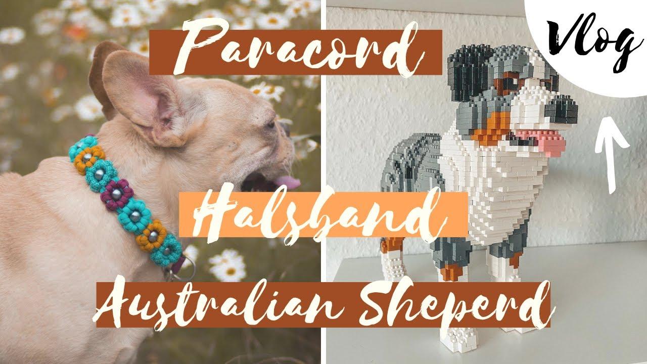 DIY PARACORD HALSBAND, AUSTRALIAN SHEPERD - VLOG