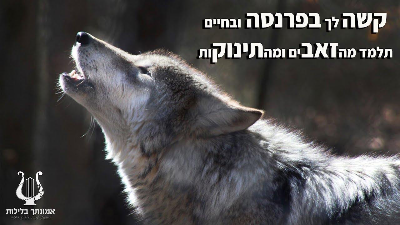 הרב רונן שאולוב - קשה לך בפרנסה !? תלמד מהזאב ומהתינוק !!! חזק ומחזק ביותר !!!